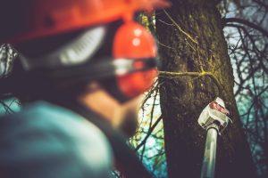 Baumpflege-300x200.jpg