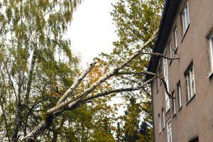 NotdienstSturmschadenbeseitigung-300x200.jpg