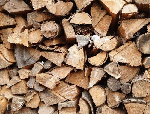Brennholz – Jetzt vorsorgen für kalte Wintertage