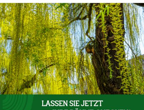 Angebot im Juli 2020 – Gratis-Baumkontrolle