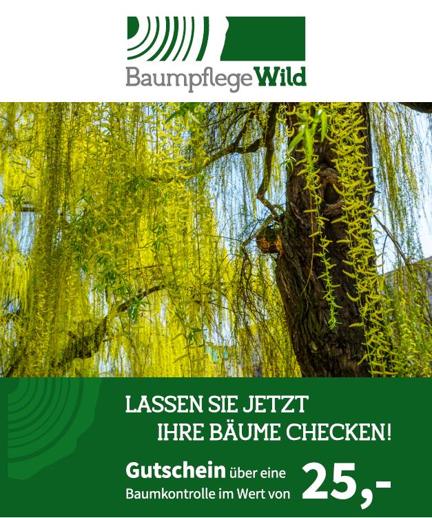 Gutschein über eine Baumkontrolle im Wert von 25,- € (Euro)